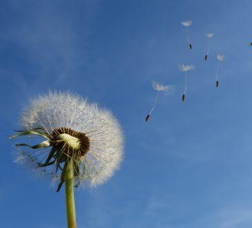 Goya wind 365x330
